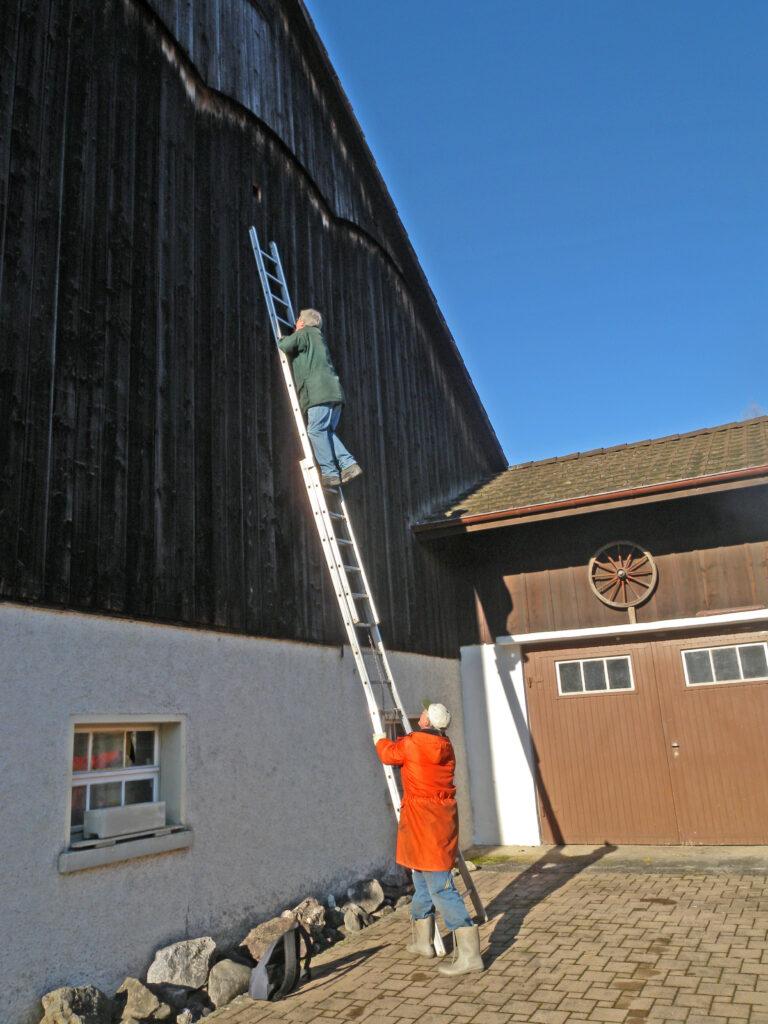 für die Kontrolle von Turmfalken-Innenkasten von aussen braucht es lange Leitern und Schwindelfreiheit