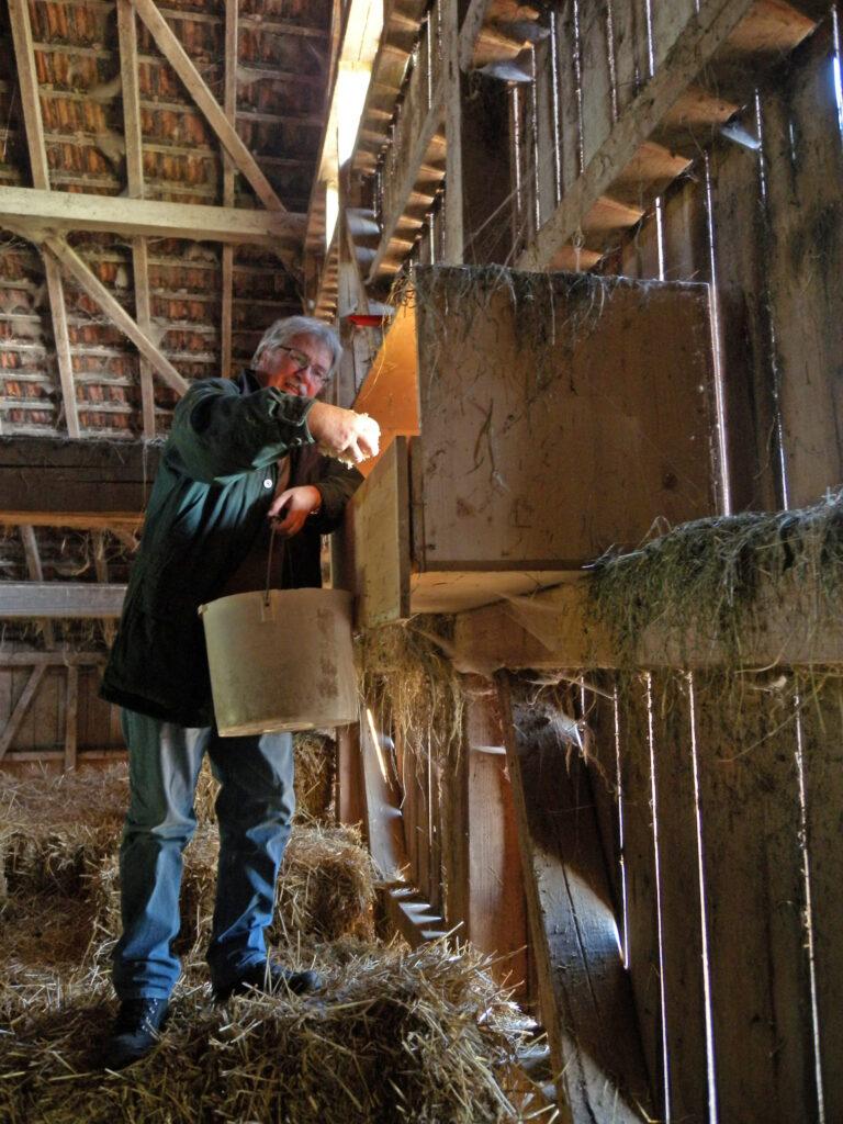 Nach der Reinigung werden Holzspäne als Nist-Unterlage eingestreit