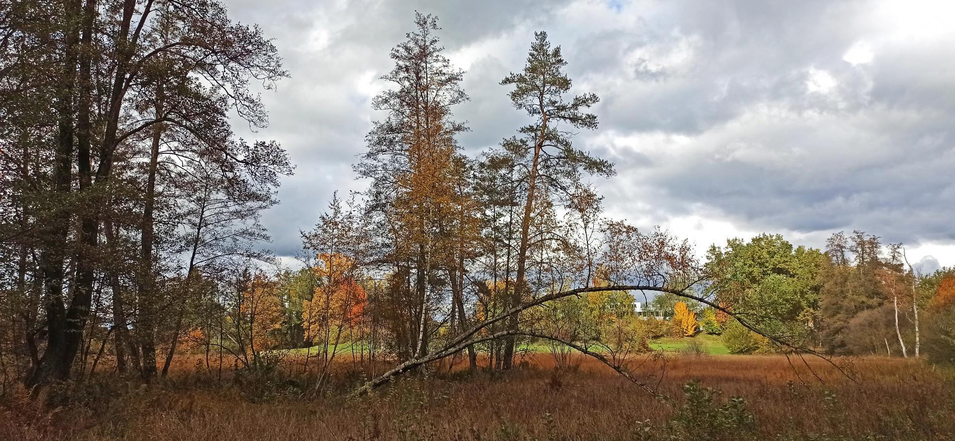 Schutzgebiet Flachmoor Chrutzelried