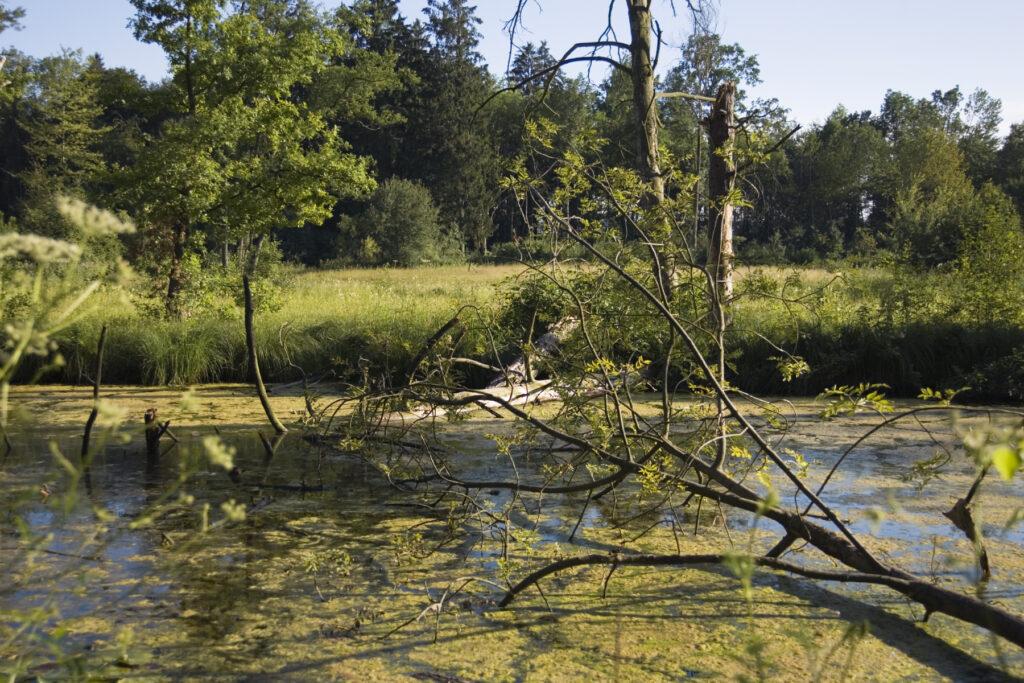 Schutzgebiet Chrutzelried
