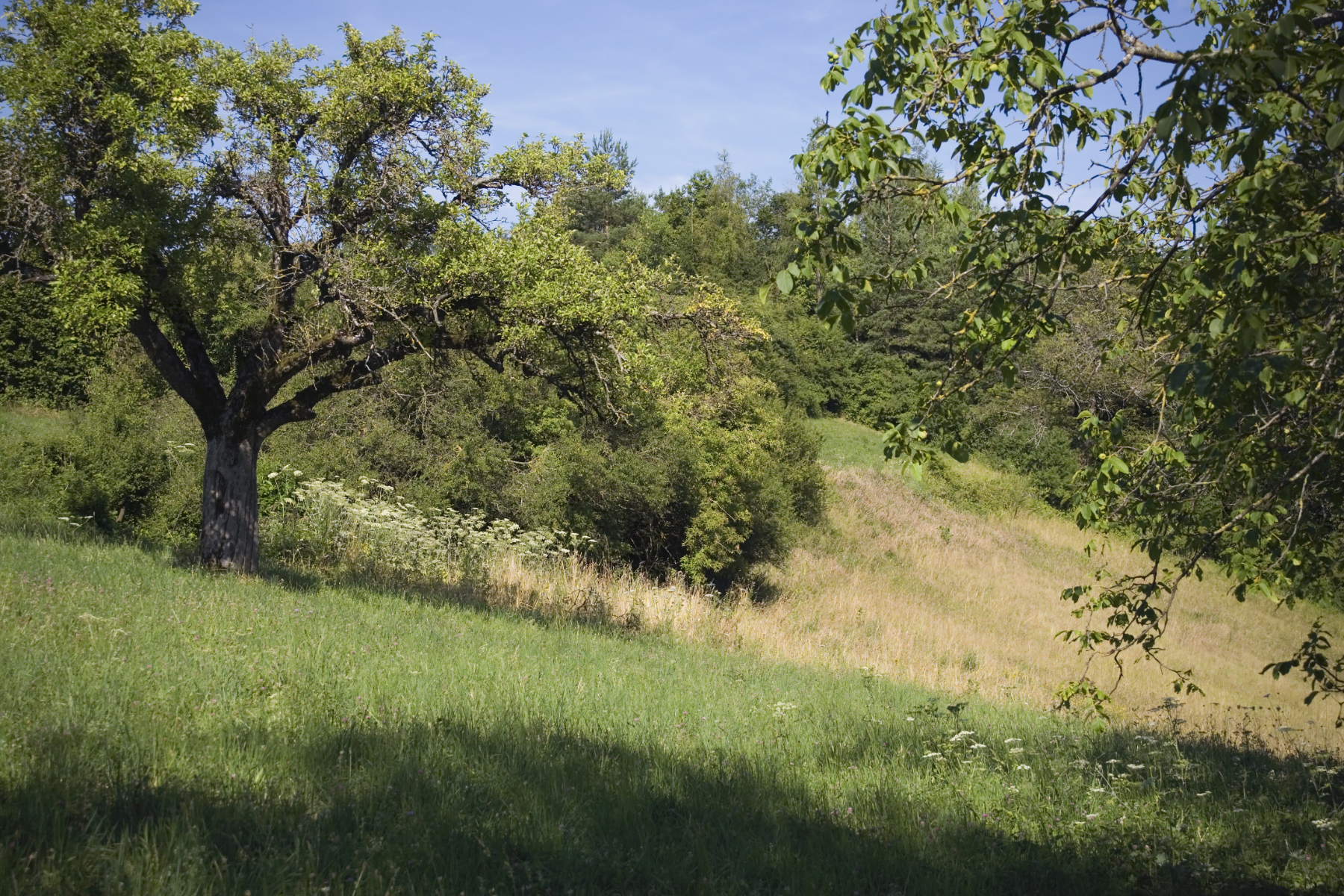 Schutzgebiet Homberg