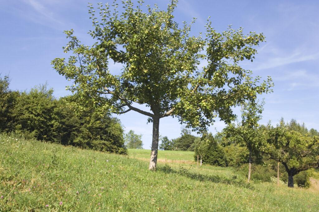 Schutzgebiet Oetenbüel
